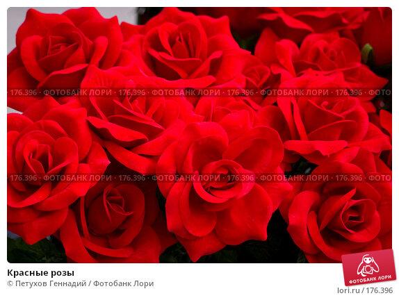 Красные розы, фото № 176396, снято 24 июня 2007 г. (c) Петухов Геннадий / Фотобанк Лори