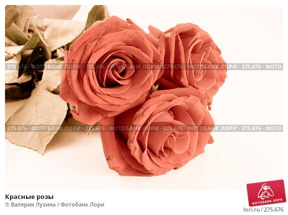 Красные розы, фото № 275676, снято 16 ноября 2007 г. (c) Валерия Потапова / Фотобанк Лори