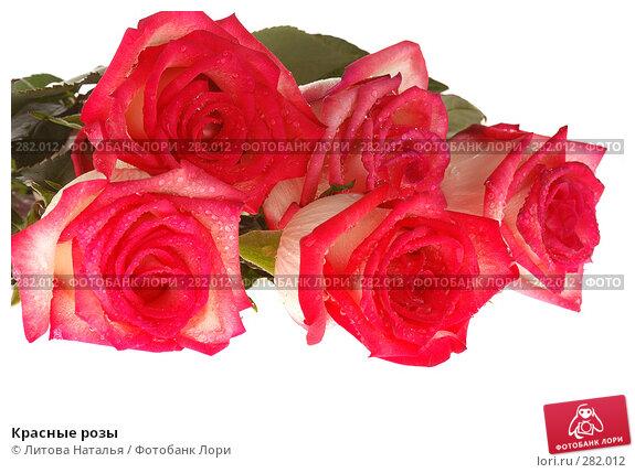 Красные розы, фото № 282012, снято 22 марта 2008 г. (c) Литова Наталья / Фотобанк Лори