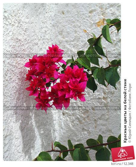 Красные цветы на белой стене, фото № 12348, снято 28 сентября 2006 г. (c) Юрий Синицын / Фотобанк Лори