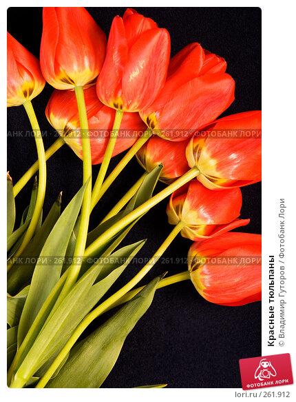 Красные тюльпаны, фото № 261912, снято 24 апреля 2008 г. (c) Владимир Гуторов / Фотобанк Лори