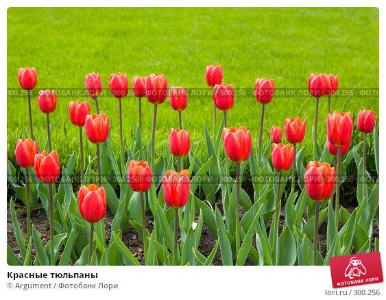 Красные тюльпаны, фото № 300256, снято 20 мая 2008 г. (c) Argument / Фотобанк Лори