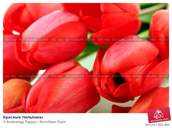 Купить «Красные тюльпаны», фото № 303460, снято 21 апреля 2008 г. (c) Александр Паррус / Фотобанк Лори