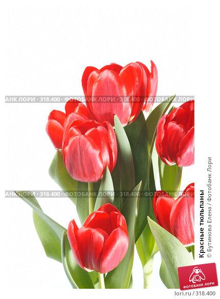 Красные тюльпаны, фото № 318400, снято 19 марта 2008 г. (c) Бутинова Елена / Фотобанк Лори