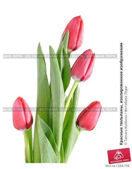 Красные тюльпаны, изолированное изображение, фото № 224116, снято 15 марта 2008 г. (c) Tamara Kulikova / Фотобанк Лори