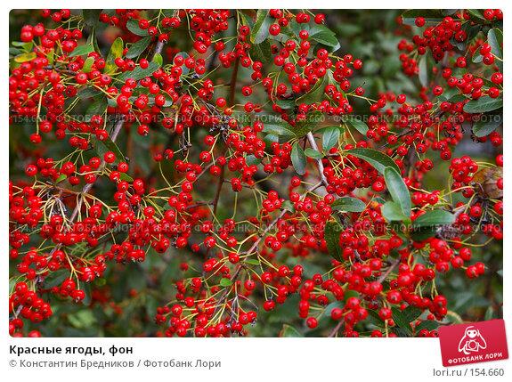 Красные ягоды, фон, фото № 154660, снято 15 октября 2006 г. (c) Константин Бредников / Фотобанк Лори