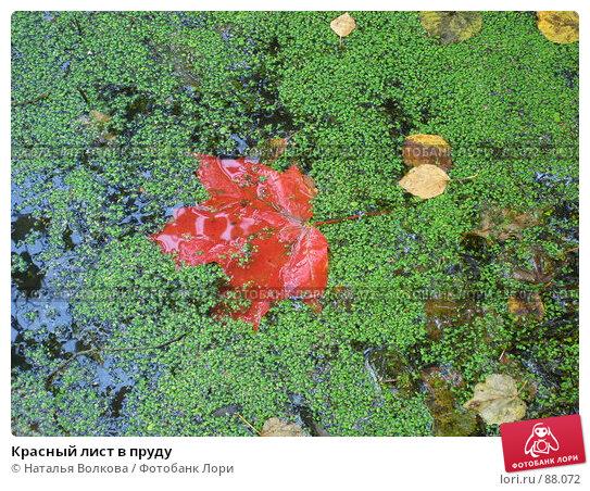 Красный лист в пруду, фото № 88072, снято 22 сентября 2007 г. (c) Наталья Волкова / Фотобанк Лори