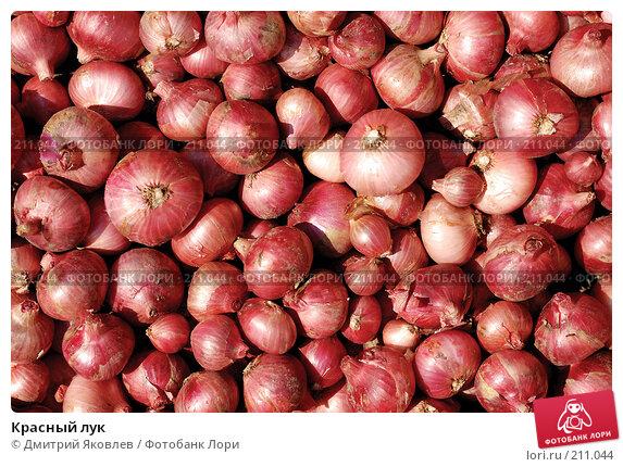 Купить «Красный лук», фото № 211044, снято 20 ноября 2017 г. (c) Дмитрий Яковлев / Фотобанк Лори