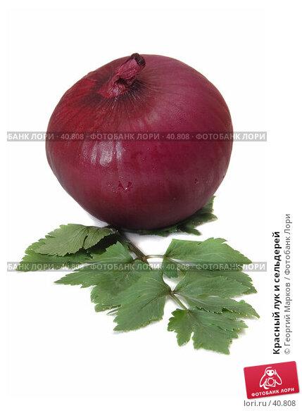 Купить «Красный лук и сельдерей», фото № 40808, снято 2 октября 2006 г. (c) Георгий Марков / Фотобанк Лори