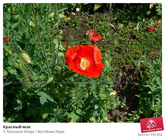 Красный мак, фото № 131912, снято 6 июня 2007 г. (c) Тютькало Игорь / Фотобанк Лори