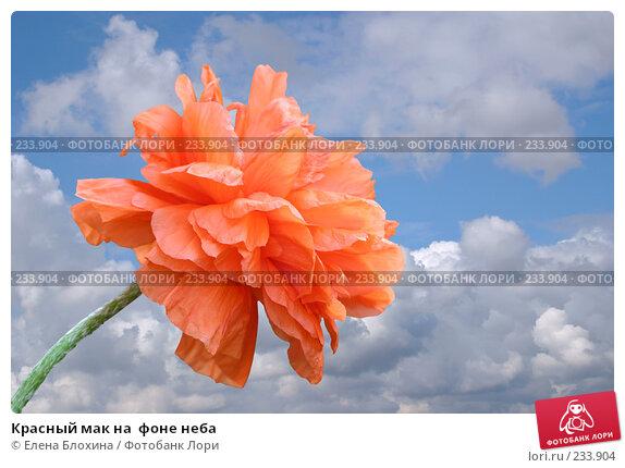 Красный мак на  фоне неба, фото № 233904, снято 24 апреля 2007 г. (c) Елена Блохина / Фотобанк Лори