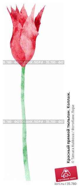 Красный прямой тюльпан. Коллаж., иллюстрация № 35780 (c) Tamara Kulikova / Фотобанк Лори