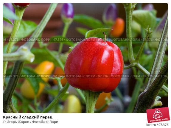 Красный сладкий перец, фото № 97376, снято 9 сентября 2007 г. (c) Игорь Жоров / Фотобанк Лори