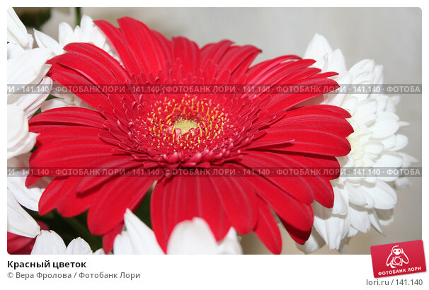 Красный цветок, фото № 141140, снято 30 сентября 2007 г. (c) Вера Фролова / Фотобанк Лори