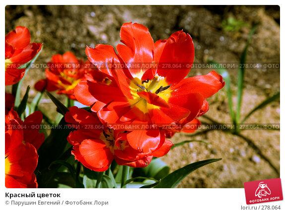 Красный цветок, фото № 278064, снято 23 сентября 2017 г. (c) Парушин Евгений / Фотобанк Лори