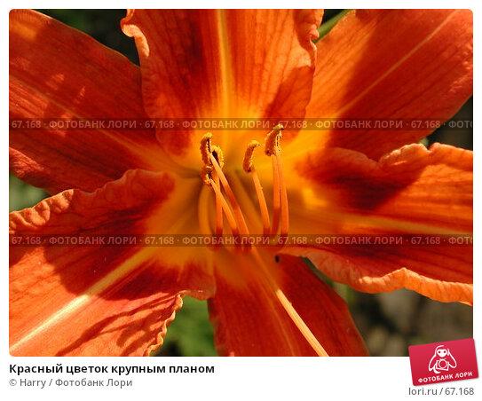 Красный цветок крупным планом, фото № 67168, снято 24 июня 2004 г. (c) Harry / Фотобанк Лори
