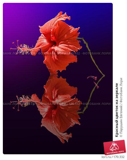 Красный цветок на зеркале, фото № 170332, снято 27 июня 2017 г. (c) Парушин Евгений / Фотобанк Лори