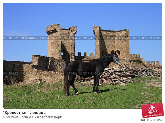 """""""Крепостная"""" лошадь, фото № 36852, снято 9 апреля 2007 г. (c) Михаил Баевский / Фотобанк Лори"""
