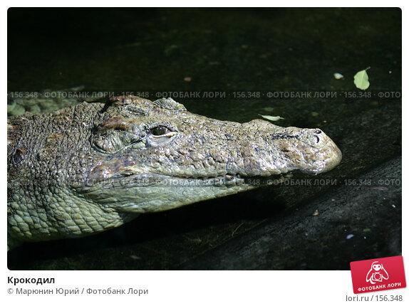 Купить «Крокодил», фото № 156348, снято 10 декабря 2007 г. (c) Марюнин Юрий / Фотобанк Лори