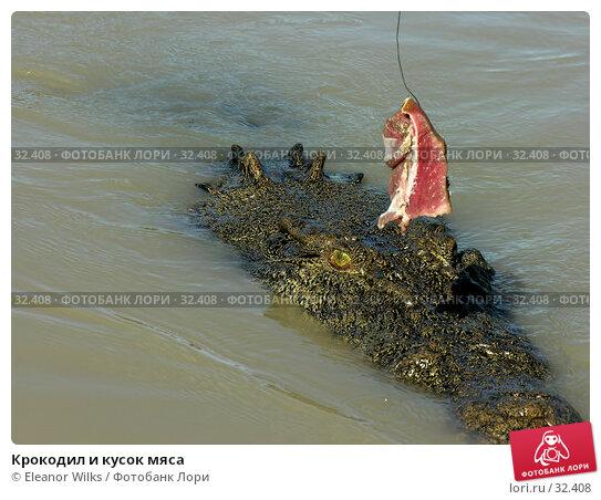 Крокодил и кусок мяса, фото № 32408, снято 21 июня 2006 г. (c) Eleanor Wilks / Фотобанк Лори