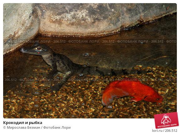 Крокодил и рыбка, фото № 206512, снято 26 мая 2007 г. (c) Мирослава Безман / Фотобанк Лори