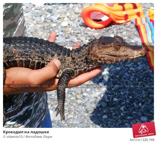 Крокодил на ладошке, фото № 226168, снято 17 августа 2007 г. (c) vitamin13 / Фотобанк Лори