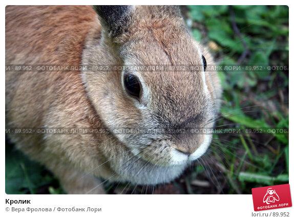 Кролик, фото № 89952, снято 17 июня 2007 г. (c) Вера Фролова / Фотобанк Лори