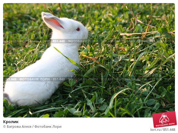 Кролик. Стоковое фото, фотограф Багрова Алеся / Фотобанк Лори