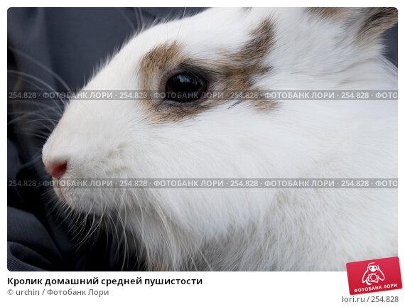 Кролик домашний средней пушистости, фото № 254828, снято 12 апреля 2008 г. (c) urchin / Фотобанк Лори
