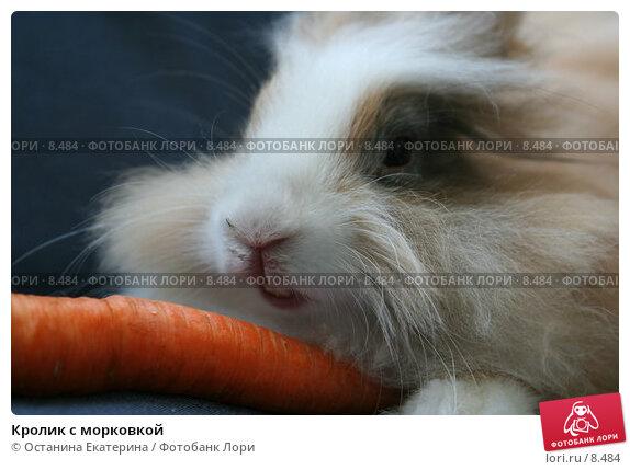 Купить «Кролик с морковкой», фото № 8484, снято 1 сентября 2006 г. (c) Останина Екатерина / Фотобанк Лори