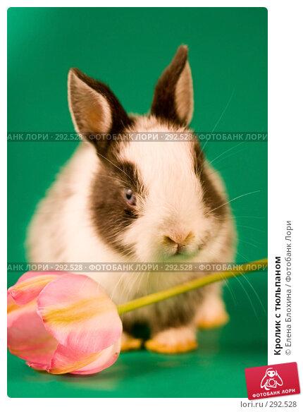 Кролик с тюльпаном, фото № 292528, снято 20 мая 2008 г. (c) Елена Блохина / Фотобанк Лори
