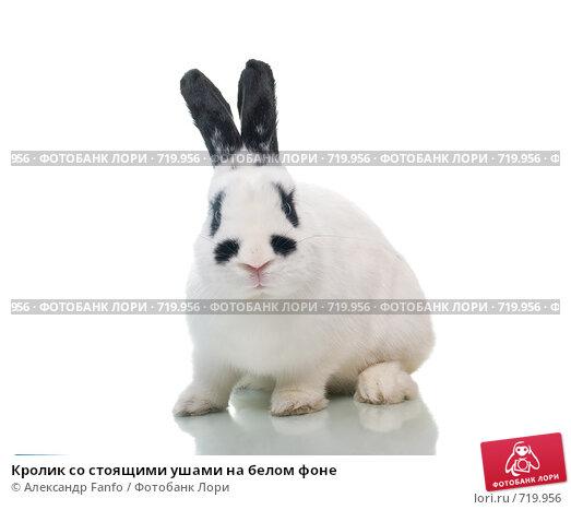 Купить «Кролик со стоящими ушами на белом фоне», фото № 719956, снято 25 июня 2019 г. (c) Александр Fanfo / Фотобанк Лори