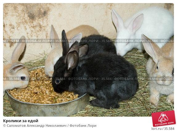 Купить «Кролики за едой», фото № 35584, снято 21 апреля 2007 г. (c) Саломатов Александр Николаевич / Фотобанк Лори