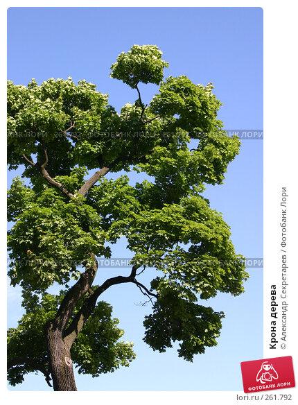 Крона дерева, фото № 261792, снято 27 июня 2005 г. (c) Александр Секретарев / Фотобанк Лори