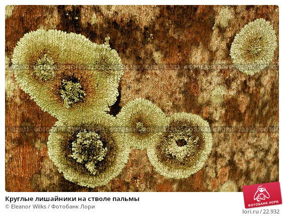 Круглые лишайники на стволе пальмы, фото № 22932, снято 9 апреля 2007 г. (c) Eleanor Wilks / Фотобанк Лори