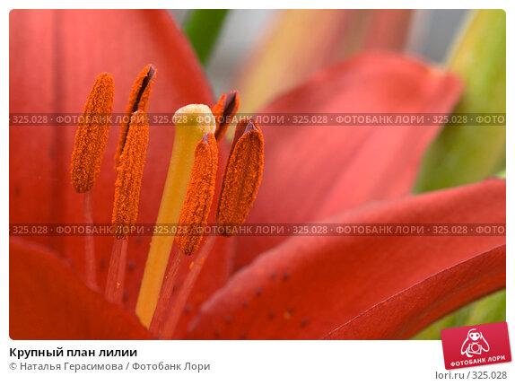 Крупный план лилии, фото № 325028, снято 16 июня 2008 г. (c) Наталья Герасимова / Фотобанк Лори