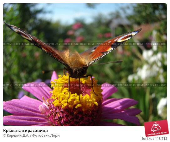 Крылатая красавица, фото № 118712, снято 1 сентября 2007 г. (c) Карелин Д.А. / Фотобанк Лори
