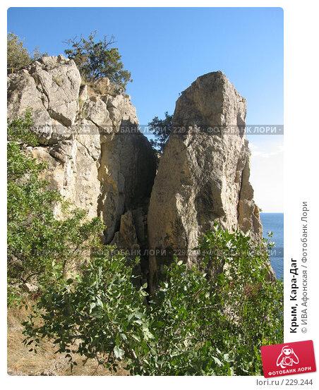 Купить «Крым, Кара-Даг», фото № 229244, снято 12 сентября 2006 г. (c) ИВА Афонская / Фотобанк Лори
