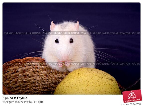 Крыса и груша, фото № 234700, снято 21 марта 2008 г. (c) Argument / Фотобанк Лори