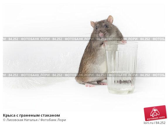 Крыса с граненым стаканом, фото № 84252, снято 15 сентября 2007 г. (c) Лисовская Наталья / Фотобанк Лори