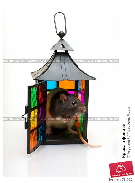 Крыса в фонаре, фото № 78992, снято 2 сентября 2007 г. (c) Argument / Фотобанк Лори