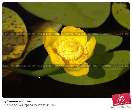 Кубышка желтая, фото № 284120, снято 2 июля 2007 г. (c) Елена Александрова / Фотобанк Лори