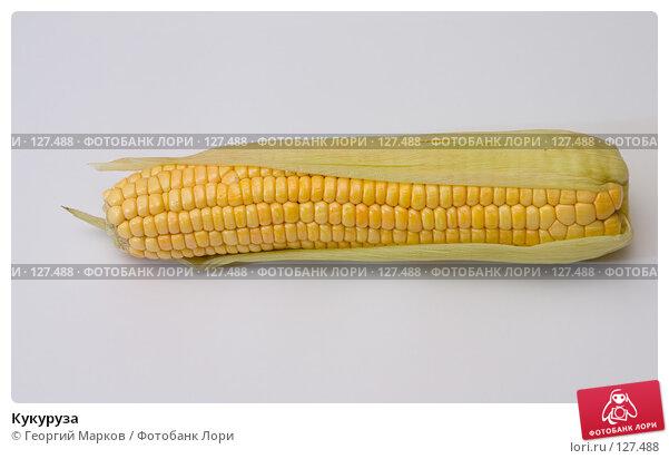Кукуруза, фото № 127488, снято 5 сентября 2005 г. (c) Георгий Марков / Фотобанк Лори