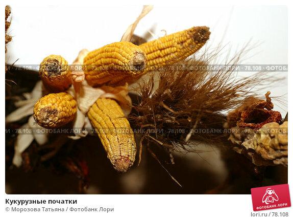 Кукурузные початки, фото № 78108, снято 9 сентября 2006 г. (c) Морозова Татьяна / Фотобанк Лори