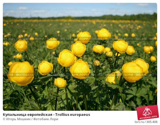 Купальница европейская - Trollius europaeus, фото № 305408, снято 31 мая 2008 г. (c) Игорь Мошкин / Фотобанк Лори