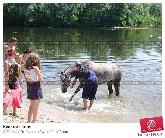 Купание коня, фото № 149348, снято 23 июля 2005 г. (c) Галина  Горбунова / Фотобанк Лори