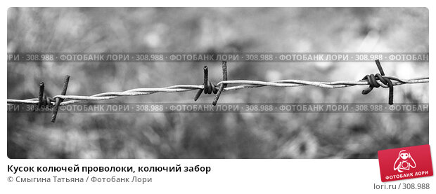 Кусок колючей проволоки, колючий забор, фото № 308988, снято 16 мая 2008 г. (c) Смыгина Татьяна / Фотобанк Лори