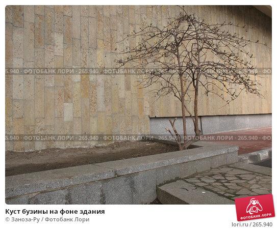 Куст бузины на фоне здания, фото № 265940, снято 19 апреля 2008 г. (c) Заноза-Ру / Фотобанк Лори