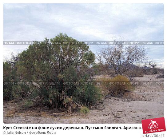 Куст Creosote на фоне сухих деревьев. Пустыня Sonoran. Аризона. США, фото № 36444, снято 26 июня 2017 г. (c) Julia Nelson / Фотобанк Лори