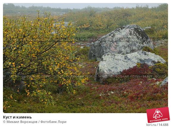 Куст и камень, фото № 14688, снято 18 августа 2007 г. (c) Михаил Ворожцов / Фотобанк Лори